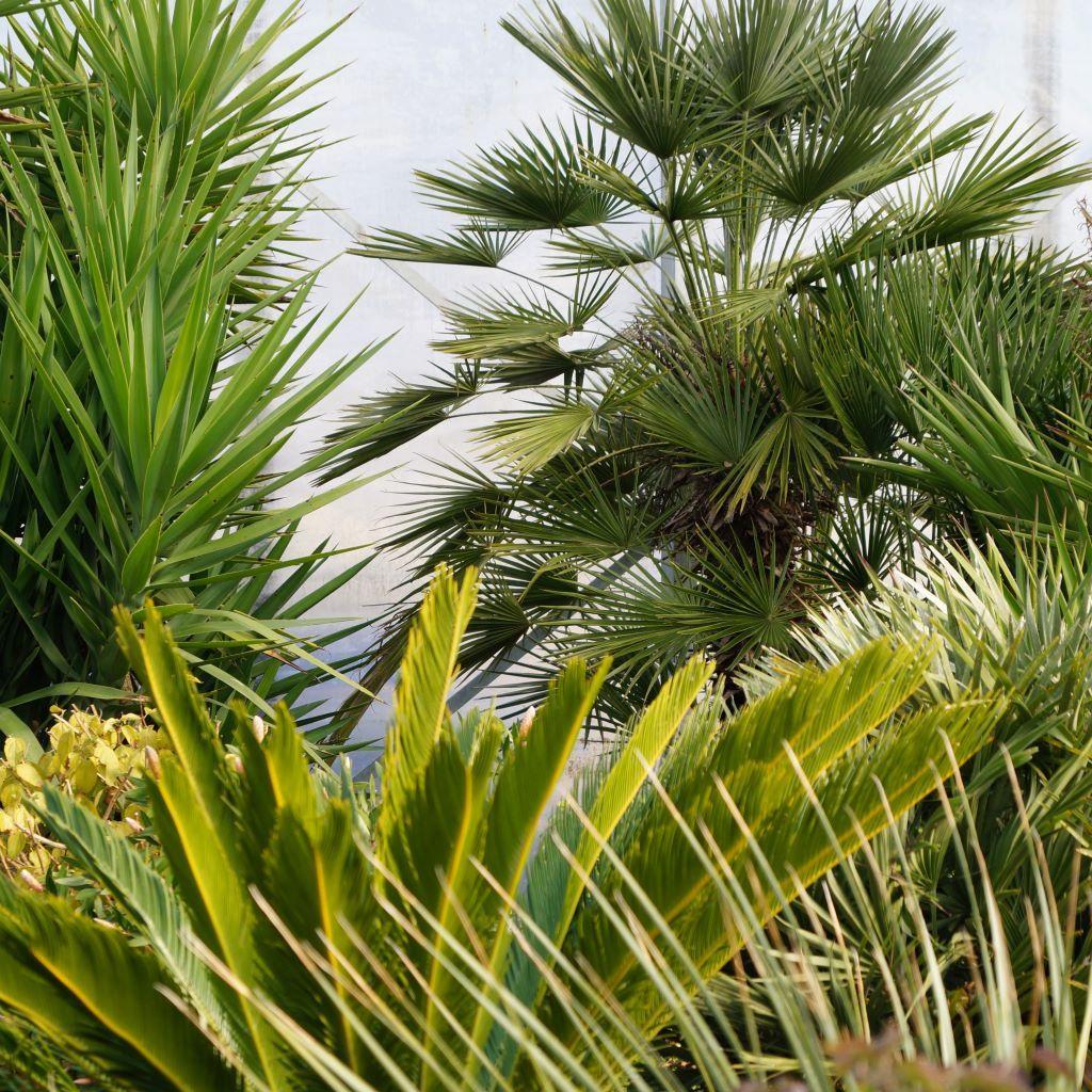 Pflanzenüberwinterung